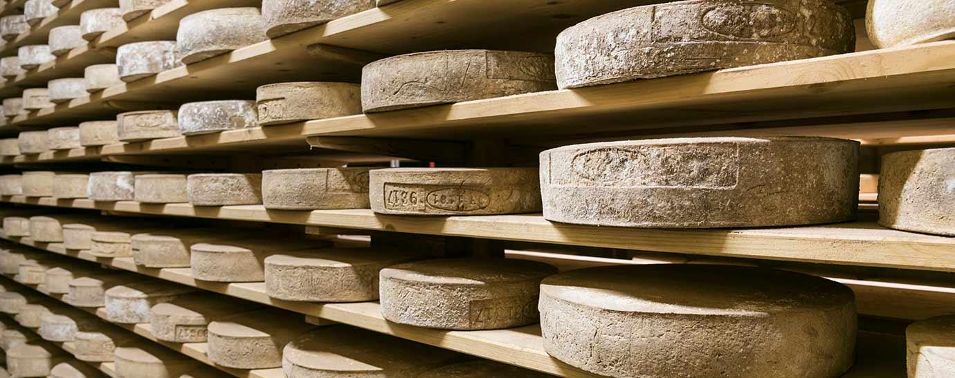 Hileras de queso Bitto madurando durante décadas